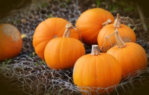 Scrape away as much as the pumpkin as possible before treating. Our laundry guide has all the tips.